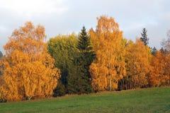 Färgrik höst - träd i höst royaltyfri foto