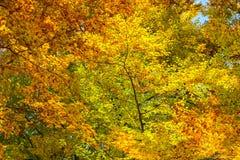 färgrik höstbakgrund arkivfoto