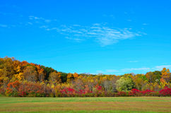 Färgrik höstlig skog Arkivbild