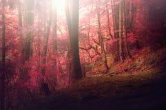 Färgrik höstlig skog i det mytiska Mountet Olympus - Grekland royaltyfria bilder