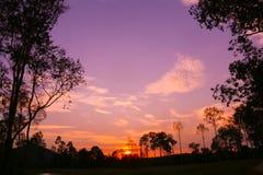 Färgrik himmelsolnedgång på skogen Arkivbild