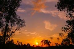 Färgrik himmelsolnedgång på skogen Royaltyfri Foto