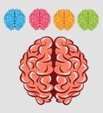 Färgrik hjärna Arkivfoto