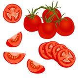 Färgrik illustration för vektor av tomaten Arkivbild
