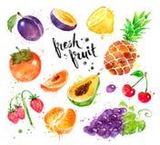 Färgrik illustrationuppsättning för vattenfärg av ny frukt Arkivfoto