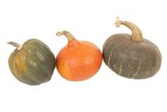 Färgrik isolerad vit bakgrund för höst tre squash Royaltyfri Bild
