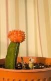 färgrik kaktus Royaltyfri Bild