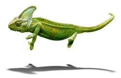 Färgrik kameleontcloseup som isoleras på vit med skugga Arkivbilder