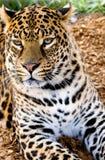 färgrik katt Royaltyfria Bilder