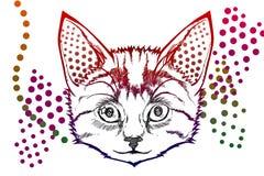 Färgrik katt Arkivfoto