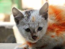 färgrik katt Royaltyfri Bild