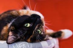Färgrik kattunge Arkivbilder