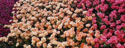 Färgrik konstgjord rosa blommaträdgård för kort och bakgrund arkivbilder