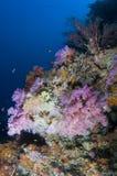 färgrik korall maldives revar slappt Arkivbilder