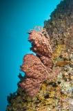 färgrik korallmaldives rev Royaltyfria Foton
