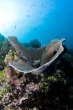 färgrik korallmaldives rev Royaltyfria Bilder
