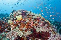 färgrik korallrev Arkivbild
