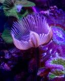 Färgrik korallrev, marin- liv i Röda havet arkivfoto