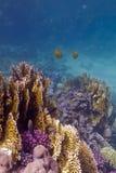 Färgrik korallrev med stenig och brandkorall och Arkivfoton