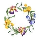 Färgrik krans för vattenfärg med irisblomman och sidor isolted på vit bakgrund royaltyfri illustrationer