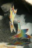 färgrik kristallis Fotografering för Bildbyråer