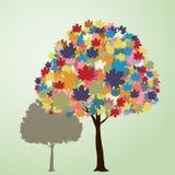 färgrik lönntree Royaltyfri Fotografi