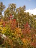 färgrik lövverk Fotografering för Bildbyråer