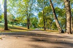 Färgrik lövverk i parkerar - i Sunny Autumn Day With Golden Leaves i träd, Lettland, Europa, begrepp av att koppla av loppdag in fotografering för bildbyråer