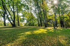 Färgrik lövverk i parkerar - i Sunny Autumn Day With Golden Leaves i träd, Lettland, Europa, begrepp av att koppla av loppdag in royaltyfri fotografi