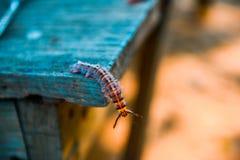 Färgrik larv på en tabell Royaltyfria Bilder