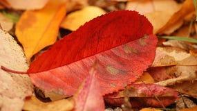färgrik leaf royaltyfria bilder