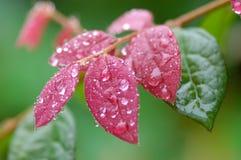 färgrik leaf royaltyfri foto