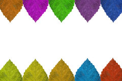 färgrik leaf Royaltyfri Bild