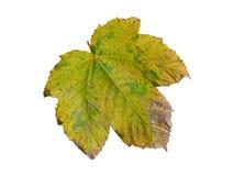 Färgrik leaf Royaltyfria Foton