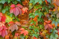 färgrik leaf för höstbakgrund Arkivbilder