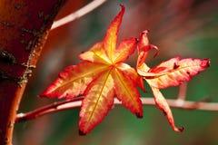 färgrik leavesfjäder Royaltyfria Bilder