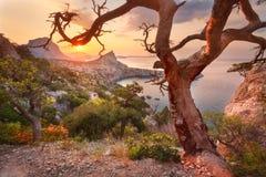 färgrik liggande Soluppgång i berg med det gamla trädet Solig mo Royaltyfria Foton