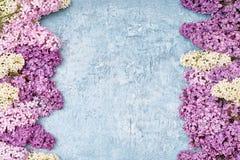 Färgrik lila blommagräns på blå bakgrund Bästa sikt, kopia Royaltyfria Foton