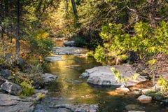 Färgrik liten vik i Calaveras stora träd delstatspark, Kalifornien Fotografering för Bildbyråer