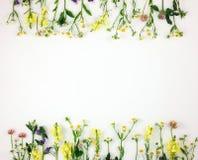 Färgrik ljus ram som göras av ängblommor Hudflänga den lekmanna- bästa sikten Royaltyfri Fotografi