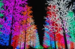 färgrik ljus tree Royaltyfri Foto