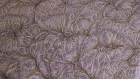 Färgrik mörkerbronsmålarfärg som blandar i vatten Virvla runt för FÄRGPULVER som är undervattens- Moln av silkeslent färgpulver K arkivfilmer