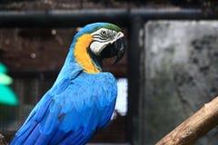färgrik macaw Fotografering för Bildbyråer