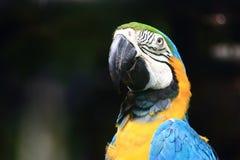 färgrik macaw Royaltyfri Fotografi