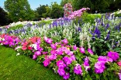 färgrik manicured blommaträdgård för azaleas royaltyfri foto