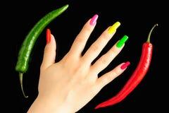 färgrik manicurepeppar för chili Royaltyfri Bild
