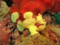 Färgrik marin- organism Arkivbilder