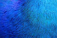Färgrik modell av påfågelfjädrar fotografering för bildbyråer