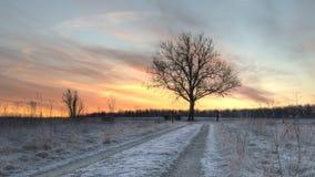 Färgrik morgon Royaltyfri Bild