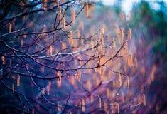 färgrik natur för bakgrund Arkivfoton